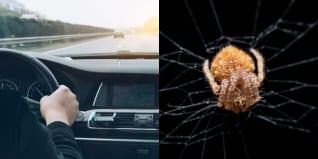 ▷ ¿Pánico extremo? Mujer choca su auto luego de ver una araña mientras conducía