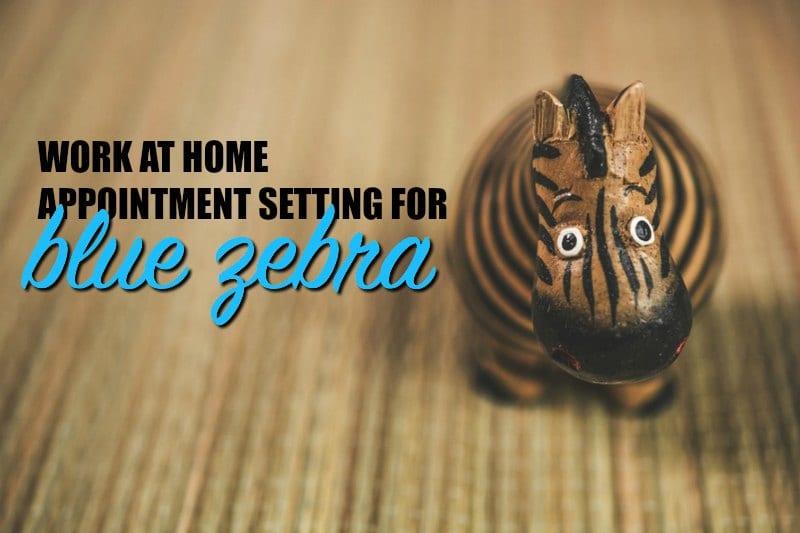 Trabajo en casa para el ajuste de citas de Blue Zebra