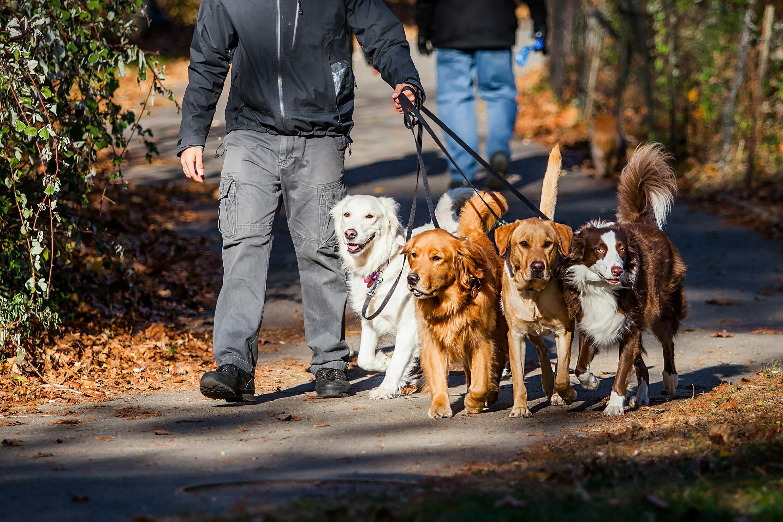 maneras de ganar dinero paseando perros