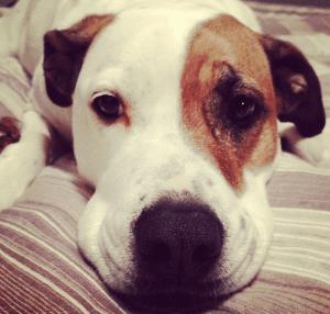 ¿Vale la pena el seguro para mascotas?