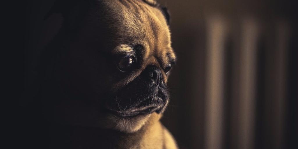 Trabajando remotamente triste perro