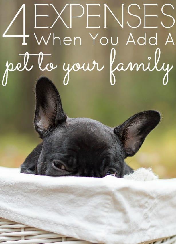 Mis mascotas y sus costos
