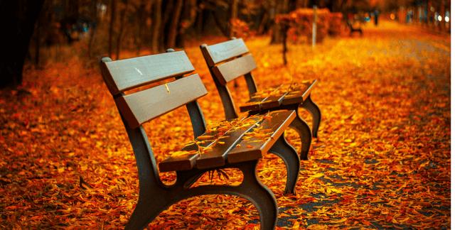 Un día de otoño en el parque.