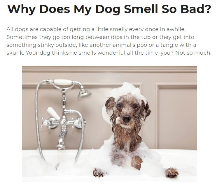 Artículo de perro