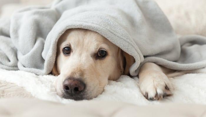 Aprenda a encontrar veterinarios baratos y asequibles