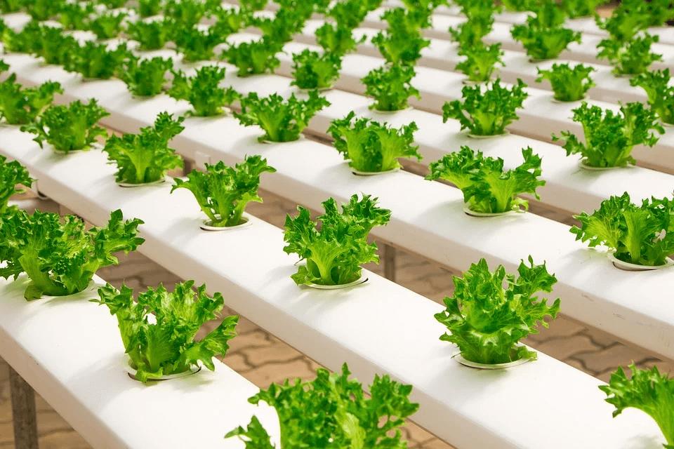 Ideas de negocios para 2020: agricultura urbana