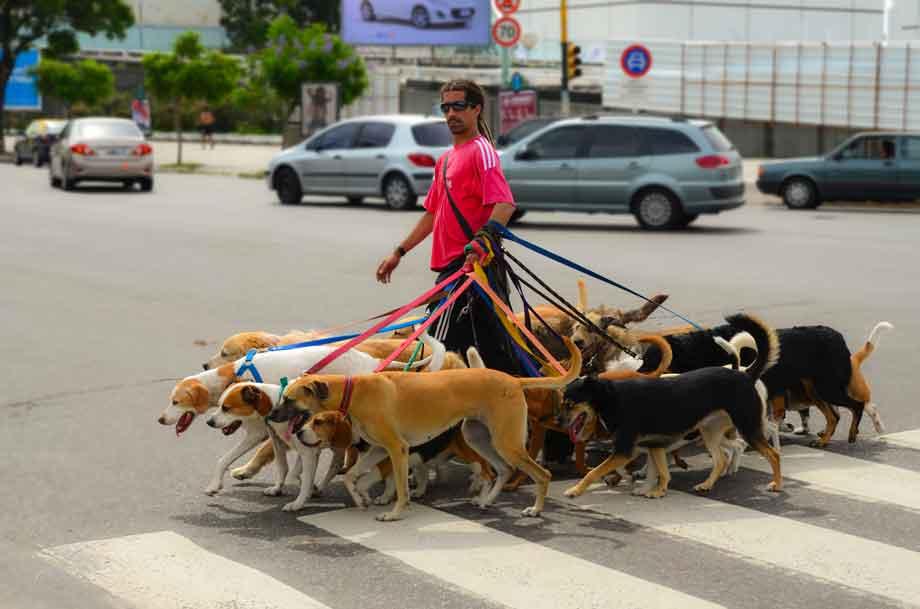 Especialistas en cuidado animal