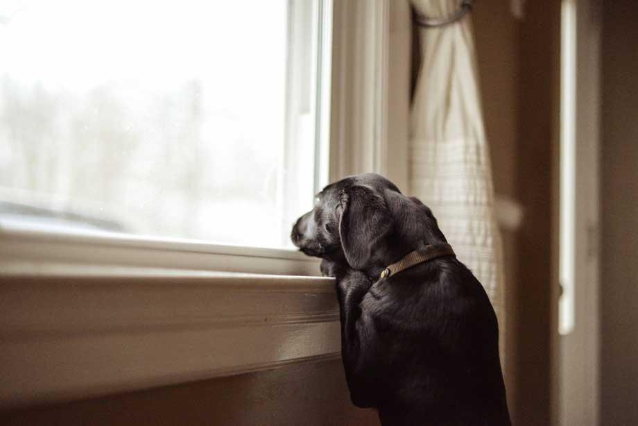 servicios de cuidado de mascotas