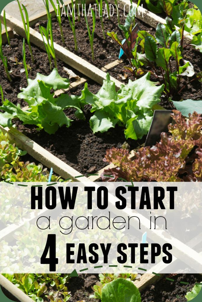 Guía de jardinería para principiantes