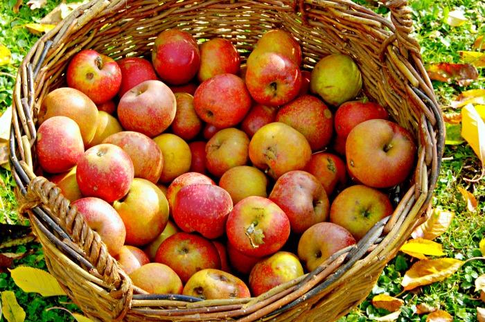 cesta de manzanas (1)